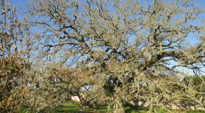 Concorso per l'albero Europeo dell'Anno 2020/ European Tree of the year 2020